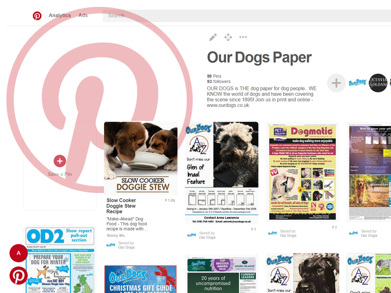 Our Dogs Pinterest